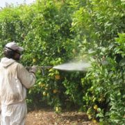 agricultores-preparan-lograr-sostenible-plaguicidas