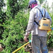 glifosato-herbicida