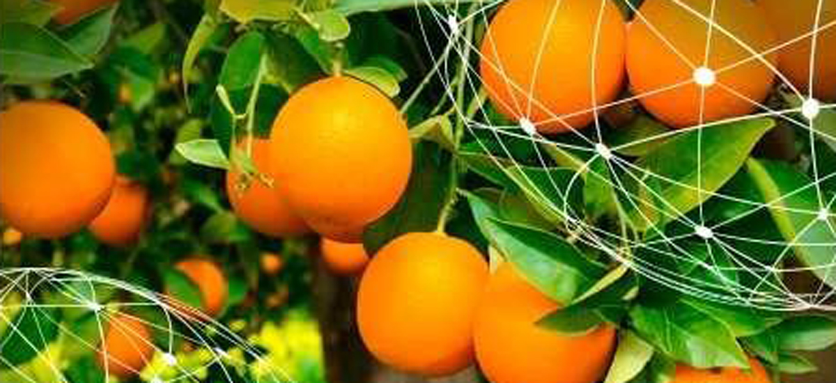 global_naranjas