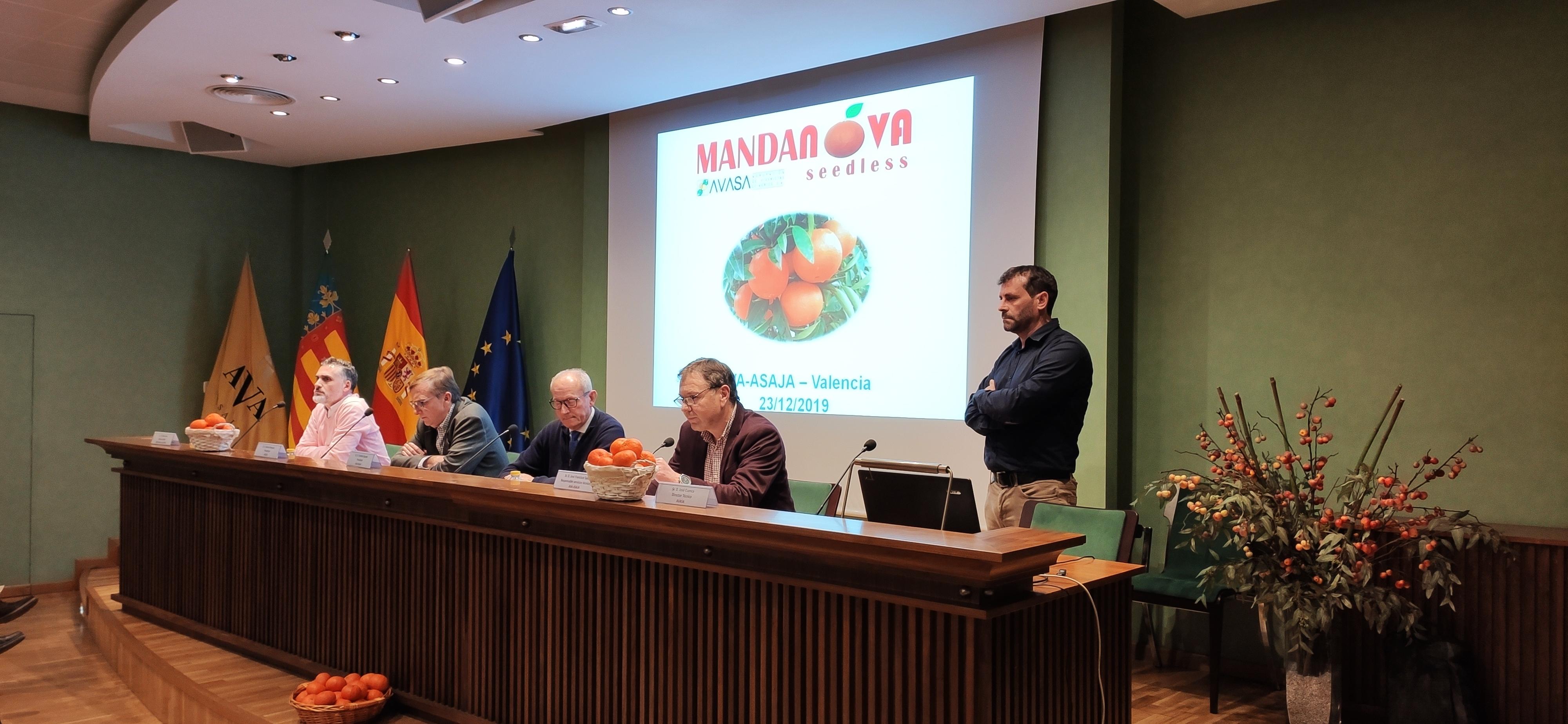 Presentación de la variedad Mandanova Seedless